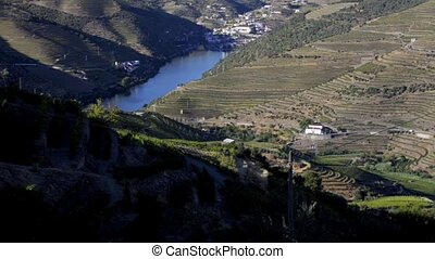 Terraced vineyards in Douro Valley - Tilt move from bottom...