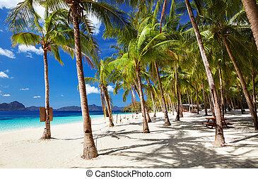 Tropical beach, Philippines - Tropical beach, South China...