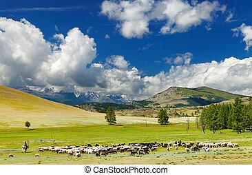 montanha, paisagem