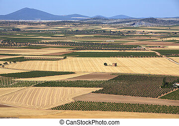 Farmland and Vineyards- La Mancha - Spain - Vineyards and...