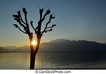 Tree and sun - Tree in sunset over an alpine lake