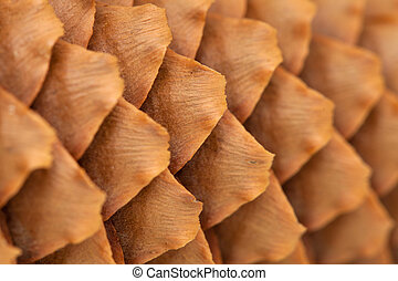 spruce cone background - spruce cone sclales natural...