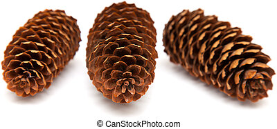 spruce cones isolated on white