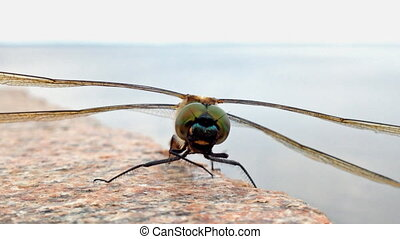 Dragonfly closeup shot