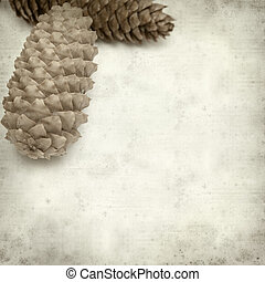textured old paper background with spruce cones