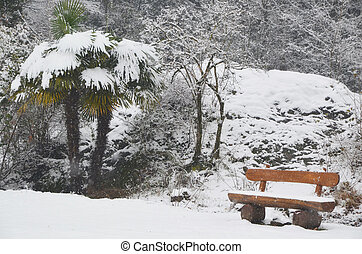 Bench and palm tree with snow - Palm tree and a bench with...