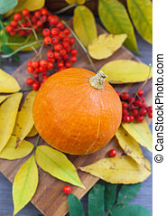 Harvested pumpkin with ashberry and fall leaves around -...