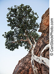 Contorted tree - A tree brows in a rocks cracks