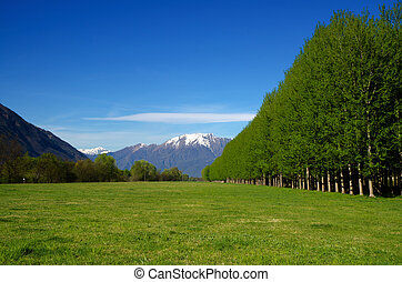 Green field with snow-capped mountains and trees