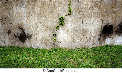 Old wall and green grass