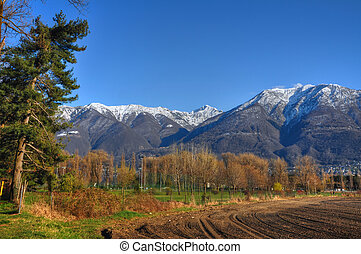 Field with trees and snow-capped mountain and blue sky