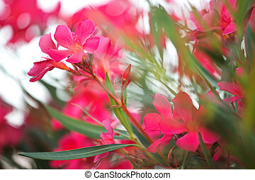 Photo of pinky rural flowers - Photo of the pinky rural...