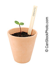 Seedling in a flowerpot, labelled as growth - Seedling...