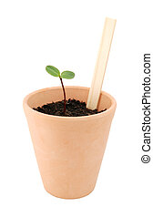 Seedling grows in a terracotta pot with a blank plant label
