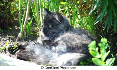 Grey cat lying in the grass