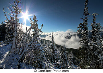 Backlit Alpine Scene - A backlit alpine scene on Mount...
