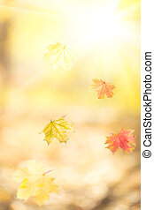 Falling autumn maple leaves against yellow sunny background