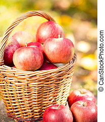Basket full of red juicy apples on wooden table in autumn...