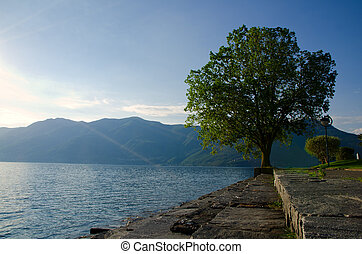 Tree on the lake front with mountains