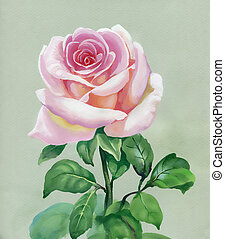 Rose pink. Watercolor Painting