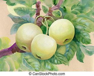 vetorial, ramo, folhas, maçã