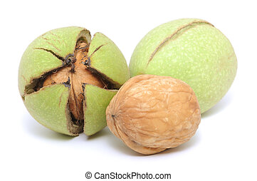 Walnuts, fresh crude, green on white background.