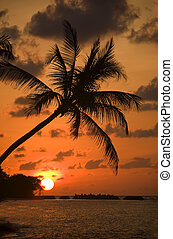 on the dream-beach - sunrise with palm-tree on a dream-beach