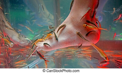 Fish spa feet pedicure skin care treatment with the fish