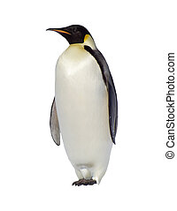 Penguin - Isolated Penguin