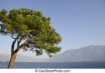 Tree on the lakefront with snow-capped mountain