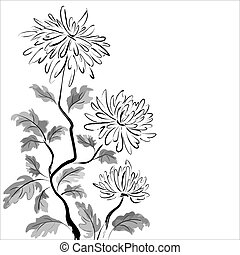 Chinese chrysanthemum. Ink painting on white background
