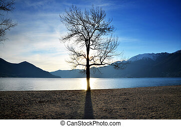 Sun and tree - Sunlight over a lake with a tree and...