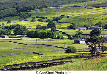 Yorkshire Dales - England - Traditional dry-stone walls in...