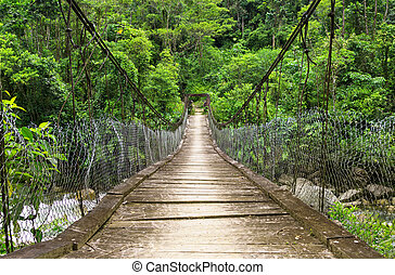 The suspension foot bridge in the jungle of Ecuador -...