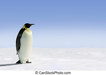 Antarctica - Penguin in Antarctica on a sunny day