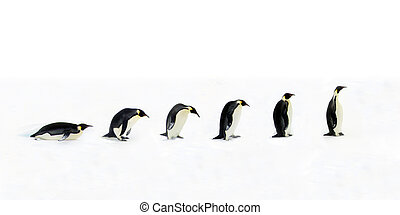 Penguin Evolution - Evolution of the penguin. Once the...