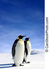 Antarctic Wildlife - Two Penguins in Antarctica