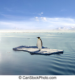 The last emperor - Emperor Penguin on a floating ice floe