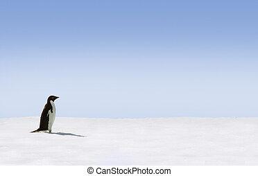 Adelie Penguin in Antarctica