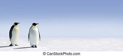 Penguin Panorama - Penguins standing in the snow with lots...