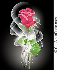 Rose and smoke on the black background