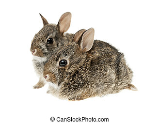 Two baby bunny rabbits - Portrait of two baby wild...