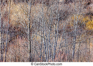 Brown winter forest with bare trees