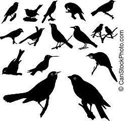 collection, oiseau, silhouettes