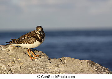 Bird Watching - A small seabird watching you