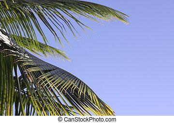 Blue sky Palm Frond