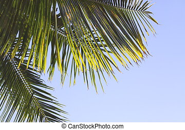 Palm Fronds with a blue sky backgroud. Great for design.