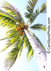 Palm Tree Exposed - A over exposed shot of a palm tree,...