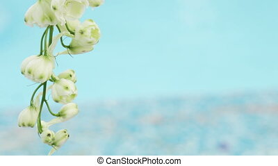 White flower - Decorative white flower on a background of...