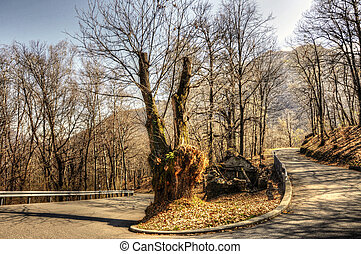 Road curve with trees and mountain